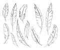 Monochrome black and white bird feather vector set Royalty Free Stock Photo
