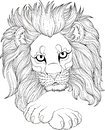 Monochrome drawing of lion for adult coloring pages