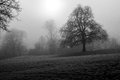 Monochrome parkland with mist black and white trees and frost Royalty Free Stock Image