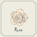 Monochrome rose flower. Vintage grunge marriage design template, floral artwork. Vector illustration of summer concept Royalty Free Stock Photo