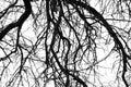 Monochrome tree branches
