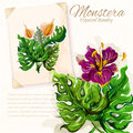 Monstera leaves with hibiscus flowers design Royalty Free Stock Photo