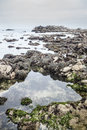 Monterey tide pool the coast of the national marine sanctuary is influenced by constant tidal exchange and wave energy pools are Stock Photography