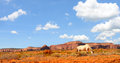 Monument Valley horses Royalty Free Stock Photos