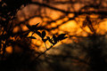 Moody Amber Sunset with Silhouette Leaves Royalty Free Stock Photo