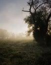 Náladový vidiecky východ slnka hmla a rosa na tráva