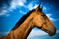 A moody side portrait of a horse with blue skies and clouds beautiful in summer Stock Photography