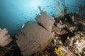 Mooie vreedzame coral reef Royalty-vrije Stock Foto