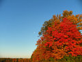 Moon in the distance over trees in full fall colors Royalty Free Stock Photo