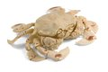 Moon crab in white back Royalty Free Stock Images