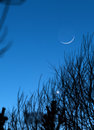 Moon earthshine astronomy abstract sky background the reflecting off the visible through tree branches during conjunction with Royalty Free Stock Image