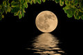 The Moon Of The Sea During