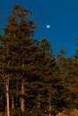 Moon Setting in a Blue Sky Stock Images