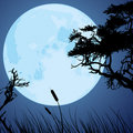 Moon and silhouettes of tree branches Stock Photography