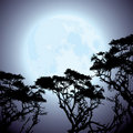 Moon and silhouettes of tree branches Stock Images