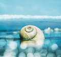 Moon snail and bokeh a seascape featuring a shell with shallow depth of field image is toned cyan blue with light effects Stock Photos