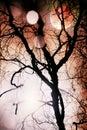 Moon through telescope through silhouette of bare tree Royalty Free Stock Photo