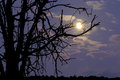 Moon through the tree shines branches silhouettes and clouds Stock Images