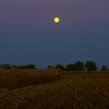 Moonlight at harvest time a moon rises above a newly harvested field of corn night Stock Photo