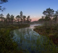 Moonset in the swamp