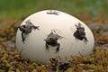 Kinder Surprise ... Moor frog,  Rana arvalis kids Royalty Free Stock Photo