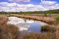 Moor Landscape