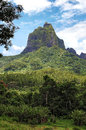 Moorea french polynesia interior of the island of in the Royalty Free Stock Photo