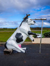 Moorine Marauder Funny Pirate Cow Cape Leeuwin Lighthouse Royalty Free Stock Photo