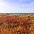 The moorland in autumn Stock Photos
