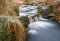 Moorland stream on icy morning frozen grasses lining the edges of a Royalty Free Stock Photo