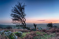 Moorland sunset a gnarled old hawthorn tree at on rugged at hleman tor near bodmin in cornwall Stock Image