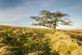Moorland tree Royalty Free Stock Photo