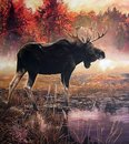 Painting of a Moose buck in a lake on an autumn morning