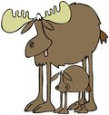 Moose and calf this illustration depicts a large bull with its standing beneath it Royalty Free Stock Photos