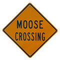 Moose Crossing Royalty Free Stock Image