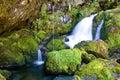 Moosiger kleiner Wasserfall Stockbilder