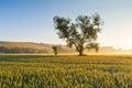 Moravia misty summer fields of wheat in czech republic Stock Photos
