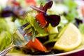 Mordida da salada na forquilha Foto de Stock Royalty Free