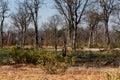 Moremi game reserve landscape beautiful in the okavango swamps okavango delta botswana Stock Photo