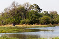 Moremi game reserve landscape beautiful in the okavango swamps okavango delta botswana Stock Images