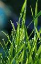 Morgon waterdrops Royaltyfri Fotografi