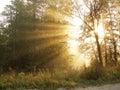 Morning beams Royalty Free Stock Photo