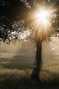 Morning beams of light Royalty Free Stock Photo