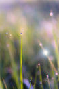 The morning dew Royalty Free Stock Photo