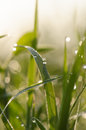 Morning dew on a blade of grass Royalty Free Stock Photos