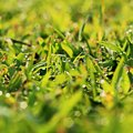 Morning dew drops on grass blades a close up shot of crystal clear green Royalty Free Stock Image