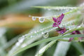 Morning dew drops on grass and flower closeup Stock Photo