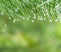 Morning dew nature background green Royalty Free Stock Photography