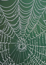 Morning dew on a spiderweb Stock Photo