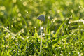 Morning dews a clear with dew on grass and mushroom Royalty Free Stock Photo